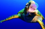 tortue-piquredemeduse-aquasportevasion-kayakevasion